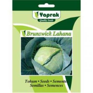 lahana brunswick